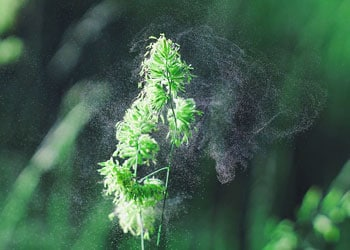 De nombreux allergènes sont présent dans notre environnement