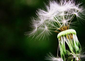 La désensibilisation est un des traitements contre l'allergie