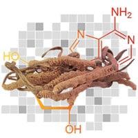 Le cordyceps, champignon aphrodisiaque