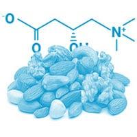 La L-carnitine pour augmenter votre énergie
