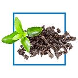 Le thé vert est un anti oxydant puissant