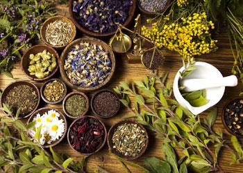 Les plantes sont utilisées en médecine depuis la nuit des temps