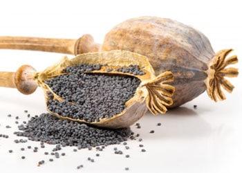 Les graines de pavot riches en fibres